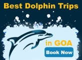 dolphin trips